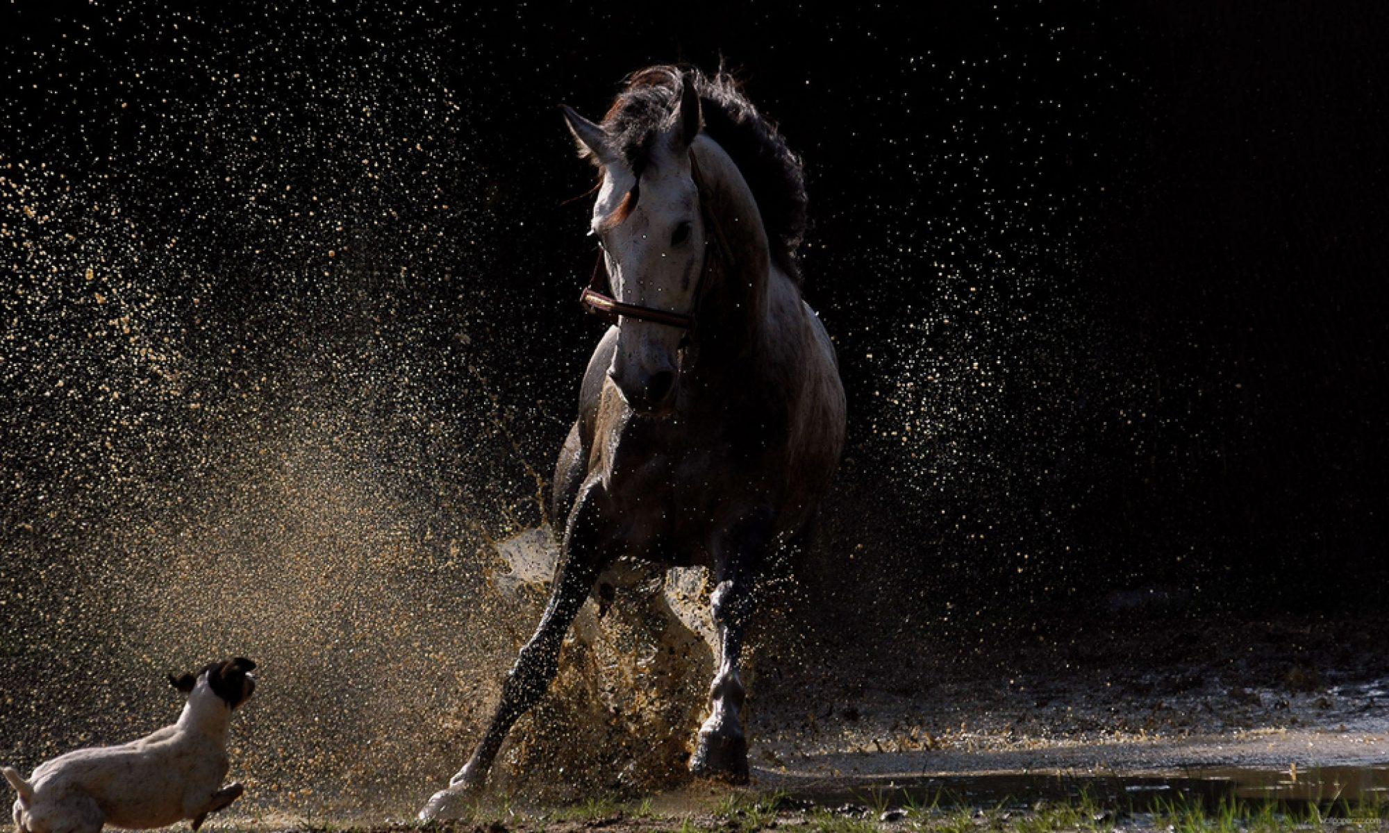 13 à cheval : L'Association de  Tourisme  Equestre des Bouches-du-Rhône